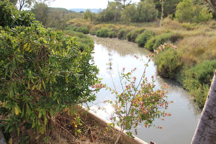 Beauty In Nature Day Green Color Growth High Angle View Nature No People Non-urban Scene Plant River Scenics - Nature Sigeanreserveafricaine Tranquil Scene Tranquility Tree Water Waterfront