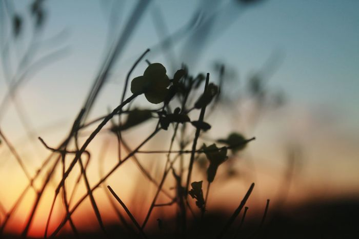 Toledo Toledo Spain Taking Photos EyeEm Selects Sunset Silhouette Flower Sky Close-up Plant Animal Themes Insect Butterfly - Insect Bug Ant Grasshopper Ladybug Animal Wing Symbiotic Relationship