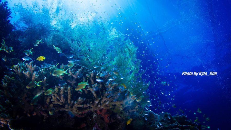Balicasag Island Philippines Bohol Balicasag Underwater Photography Diving Diver Scuba Diving Sea Nature Sea Life UnderSea First Eyeem Photo