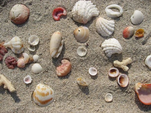 Seashell No People Close-up Pebble Backgrounds Indoors  Day Sea Life Miami Beach Nofilter Miami, FL Nature Adapted To The City Ocean View EyeEmNewHere Miami Heaven 🇺🇸☀️FL