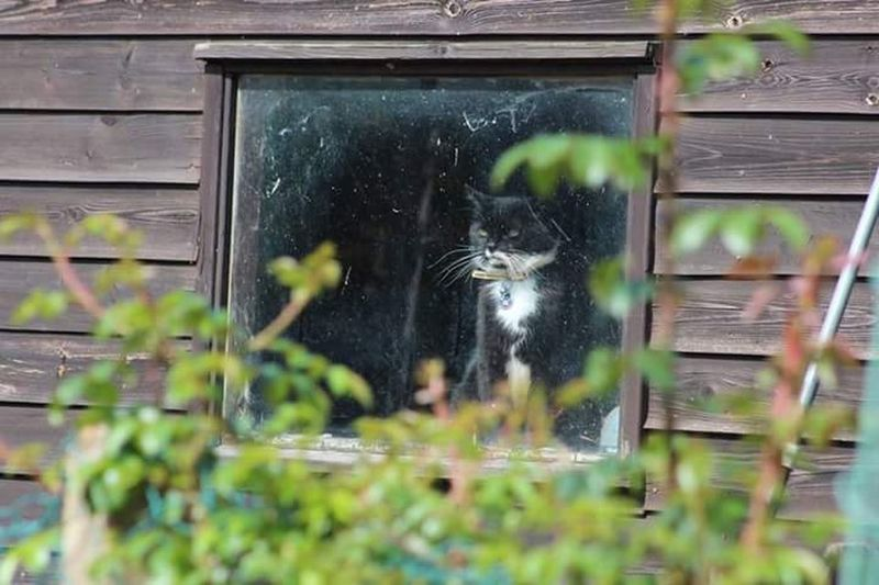 Cats Through