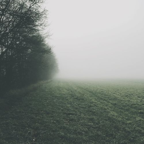 Fog Poland Forest How's The Weather Today? VSCO EyeEm Best Shots IPhoneography IPhoneographer Iphoneonly IPSNatural IPS2015Fall