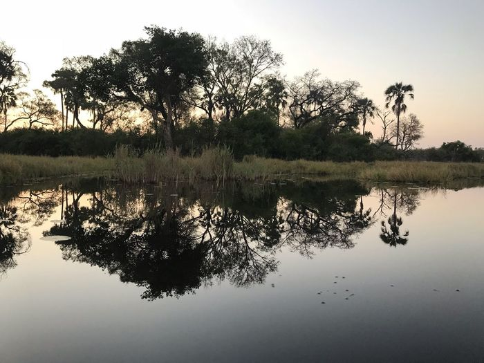 Reflections at sunset in the Okavango Delta Reflections In The Water Plant Reflection Water Tree Sky Tranquility Lake Nature Beauty In Nature Tranquil Scene Scenics - Nature Waterfront No People Silhouette Clear Sky Symmetry Outdoors