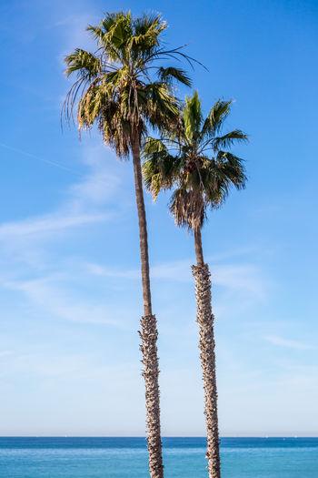 Palm trees at beach against blue sky