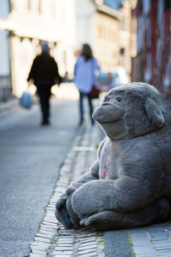 City Architecture Focus On Foreground Street Day Incidental People Footpath One Animal Building Exterior People Full Length City Life Walking Sidewalk Outdoors Built Structure Adult Toy Toy Animal Funny Sitting Outside Watching Unusual Big Toy Monkey Toy
