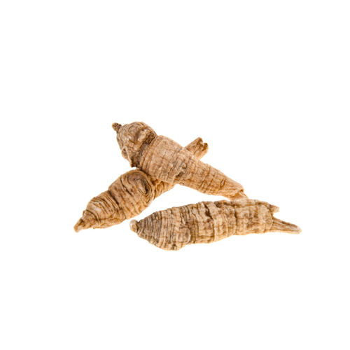 High angle view of lizard on white background