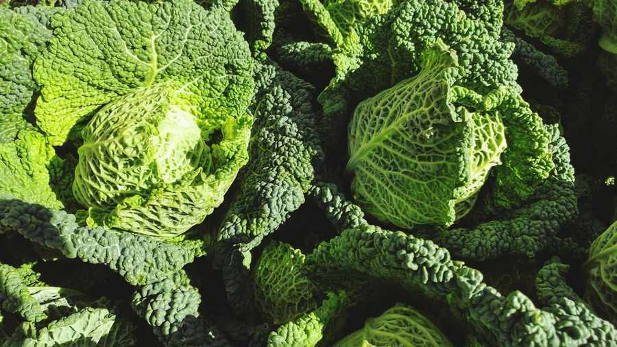 A pair of organic savoy cabbages sunbathing. Green Color Backgrounds Healthy Eating Vegetable No People Cabbage Freshness Leaf Organic Food Organic Farming Savoy Cabbage Light And Shadow Farmers Market Winter Harvest  Comfort Food Fresh Ingredients