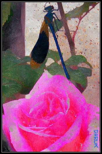 Rose and dragonfly💙 Symbolism Is Everything Bold And Beautiful Beauty_collection Beautiful Nature Prettypink