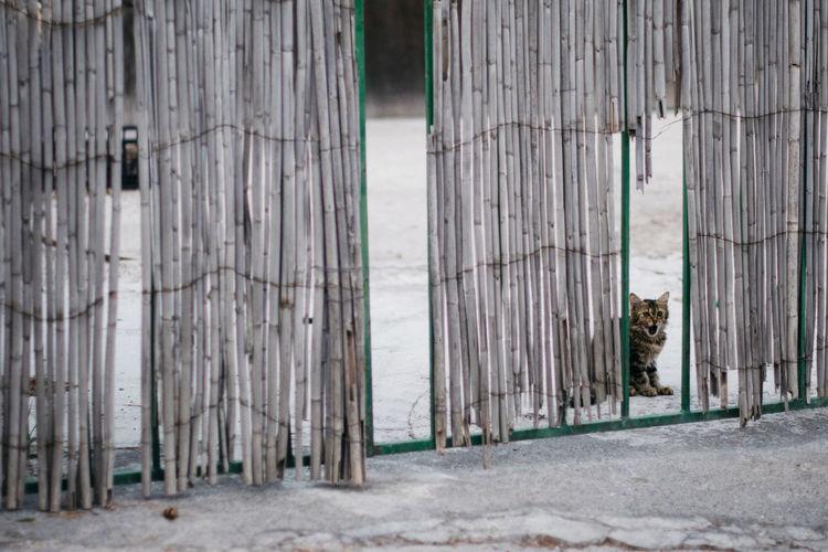 Cat seen through fence