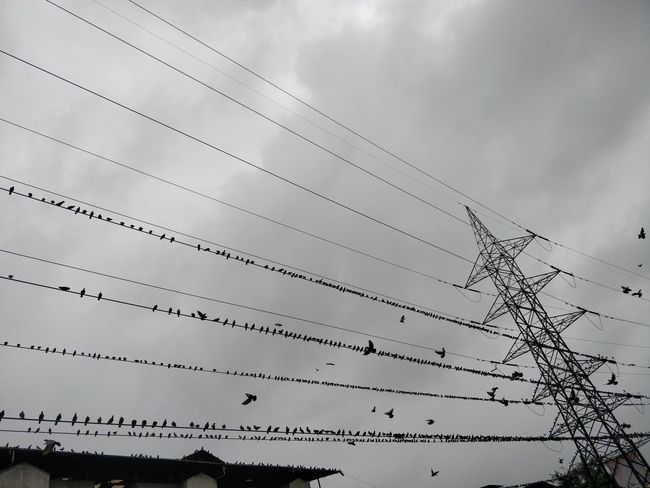 Animals In The Wild Cable Cloud - Sky Complexity Connection Day Electrical Equipment Electricity  Electricity Pylon Flock Of Birds Fuel And Power Generation Low Angle View Nature No People Outdoors Overcast Power Line  Power Supply Sky Technology Telephone Line Vertebrate