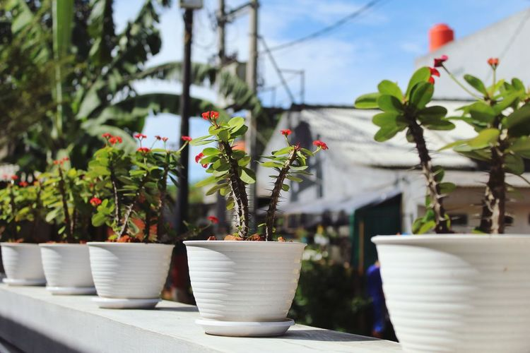 Close-up of potted plants against trees