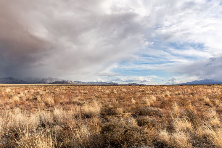 Beauty In Nature Cloud - Sky Day Environment Grass Horizon Horizon Over Land Land Landscape Nature No People Non-urban Scene Outdoors Overcast Plant Prairie Scenics - Nature Semi-arid Sky Storm Storm Cloud The Great Outdoors - 2018 EyeEm Awards