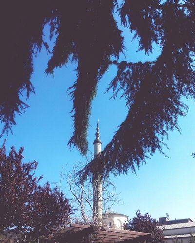 Sedirlerin Altında Mosque Cedars Trees Eye For Photography Peace And Love EyeEm Streets Trabzon Turkey Cedar