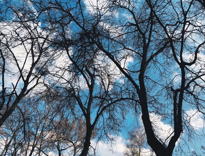 Tree Sky And Trees Transition Blue Color Low Angle Low Angle View Sky Tree Plant Low Angle View Branch Sky No People Beauty In Nature Growth Outdoors Bare Tree Nature Tranquility Day Plant Part Full Frame Leaf Backgrounds Tree Trunk Clear Sky Trunk