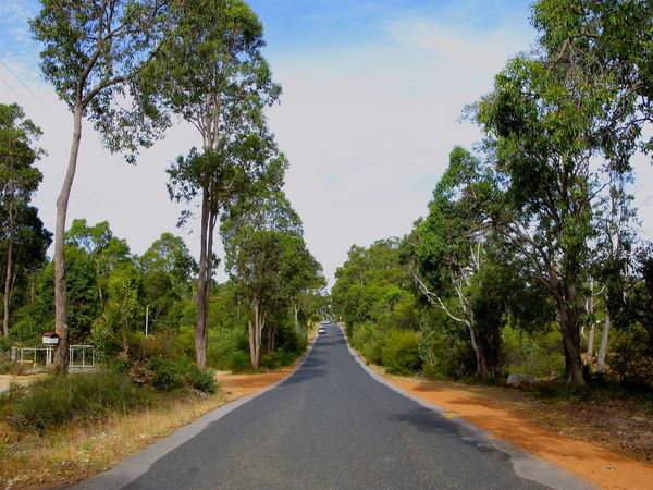 Asphalt Blue Sky Blue Sky And White Clouds Clear Sky Day Eucalyptus Eucalyptus Trees Growth Gum Tree Gum Trees Jacoby Street Landscape Lush - Description Nature No People Outdoors Red Earth Road Scenics Sky Street The Way Forward Tranquility Tree Trees