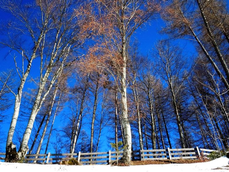 Autumn Colors Blue Blue Sky Cold Temperature Fence Growth Low Angle View My Year My View Nature Outdoors Snow Tree Trees Trees And Sky Trees Collection Trunck Woods