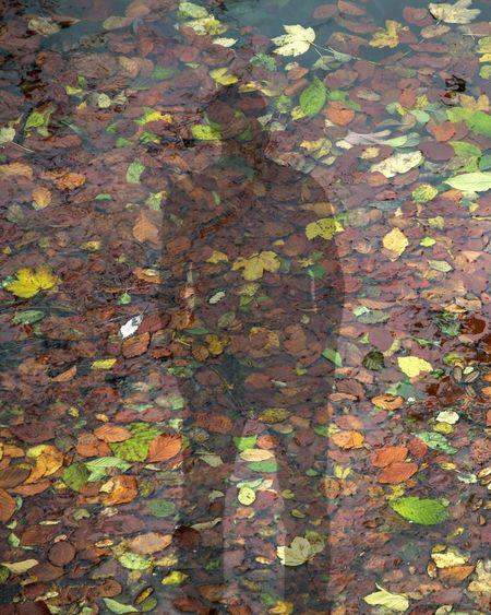 Plitvice National Park Autumn Colors Shadow Travel Traveling EyeEm Best Shots EyeEm Nature Lover EyeEmBestPics EyeEm Best Edits The Week On EyeEm Croatia Full Frame Leaf Day Autumn High Angle View Outdoors Textured  Nature Close-up
