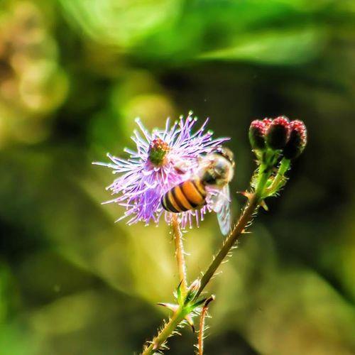 HoneyBee Bee Flower Wild Nature Insect Wonders Photowalk Pw_mumbai Pw_camouflageblend Thane India