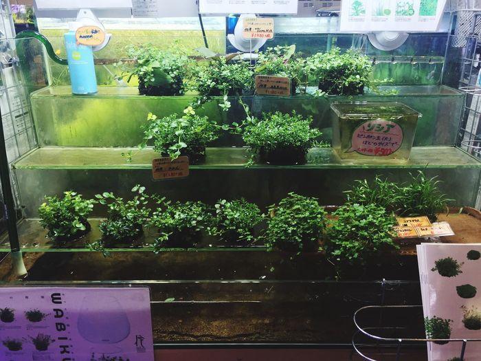 侘び草 WABIKUSA Wabi-sabi Japanese  Japanese Garden Japan Water_collection Waterfall Aquatic Plants