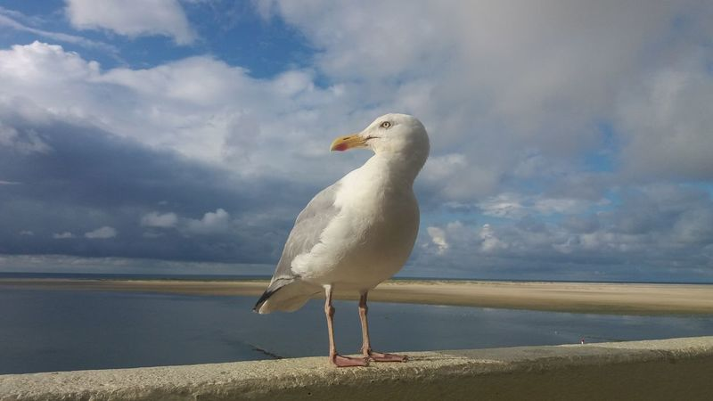 Animal Beauty In Nature Bird Day Nature No People One Animal Sea Sea Mew Seagull Sky Water