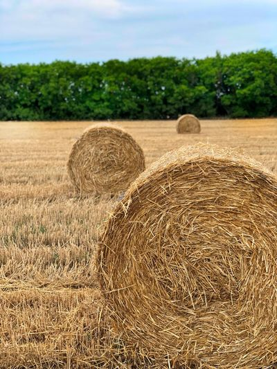 Hay rolls on