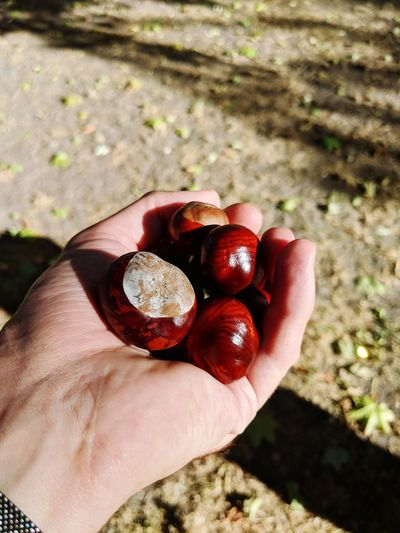 Chestnut Togetherness Autumn Autumn colors Park Life Urbanphotography Park Berlin Human Hand Holding Fruit Personal Perspective Close-up