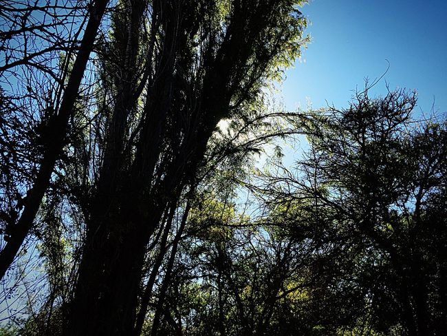 Entre lo verde Tree Plant Low Angle View Sky No People Nature Branch