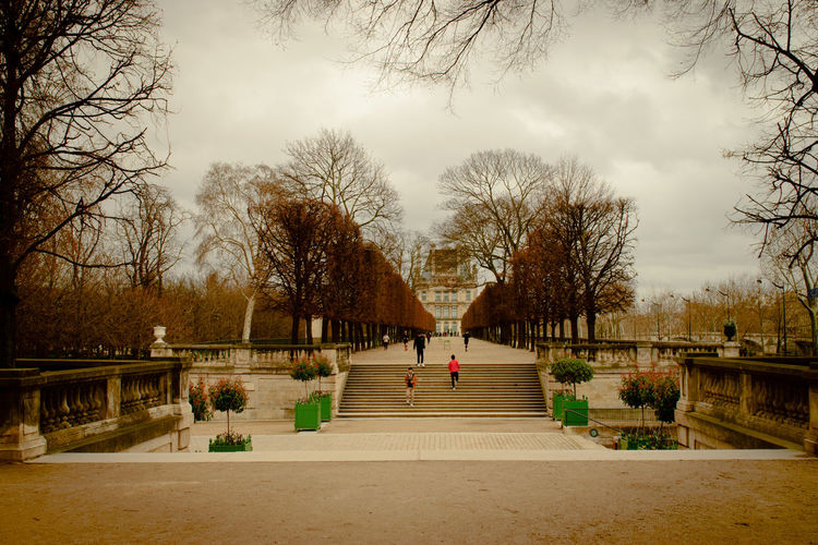 Parisien gardens Tree Plant Architecture Bare Tree Sky Nature The Way Forward Direction Day Transportation Road Built Structure Staircase Railing Footpath Real People Outdoors Bridge Group Of People Footbridge Formal Garden Formal Paris France Europe Stairs Steps Movement Jogging People Winter Springtime Silhouette Green Color Historic Lines