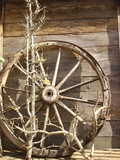 Brown Close-up Day Dead Tree No People Outdoors Spoke Wagon Wheel Wheel Wood - Material