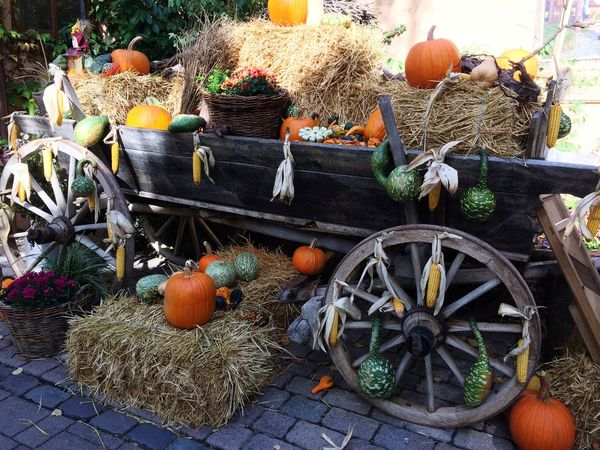 Tripsdrill - Herbstliche Ambiente Warm Tripsdrill Thanksgiving Autumn Wood Day Celebration Food Fruit Decoration Outdoors Healthy Eating