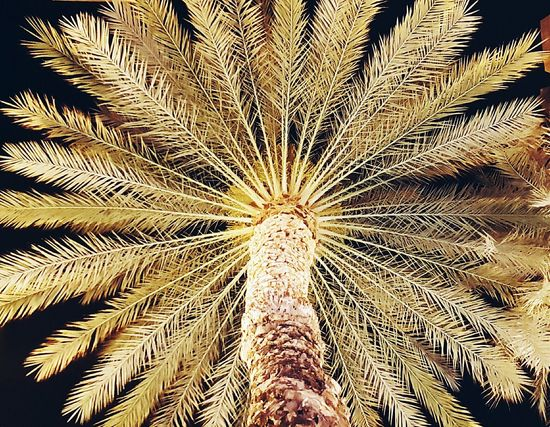Elche Palm Grove Huerto Palm Palm Trees Palm Tree Tree Trees TreePorn Tree And Sky Palms Palm Trees ❤❤ Summer Summer Nights Hanging Out Check This Out Hello World That's Me Taking Photos Cheese! Relaxing Hi! Enjoying Life Sharing A Moment EyeEm Gallery