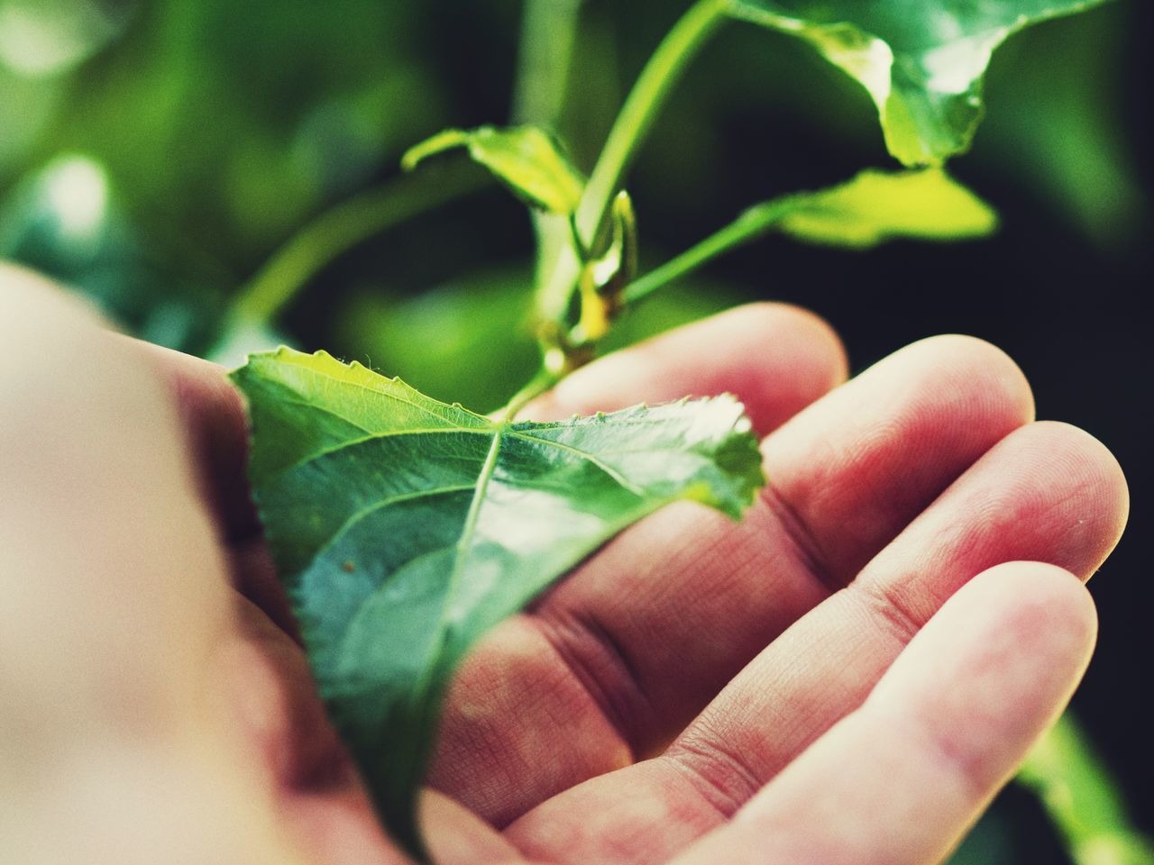 human hand, leaf, human body part, close-up, one person, one animal, real people, animals in the wild, outdoors, day, nature, fragility, animal themes, beauty in nature, people