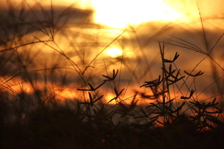 Close-up of silhouette plants against sunset sky