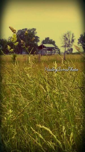 Country Inspiration Nature EyeEm Best Shots