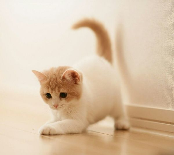 Hi! Check This Out Meow Kitten Cute Cute Kitten