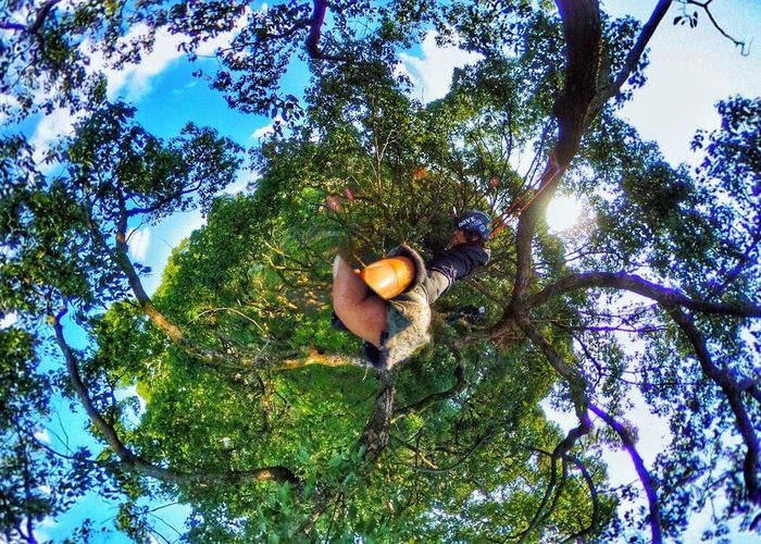 Tree Sky Forest F4F Tree Climbing Climbing Followback Beautiful HDR Tree Of Life Gopro Goprooftheday 360 Theta360 Nature Outdoors Japan