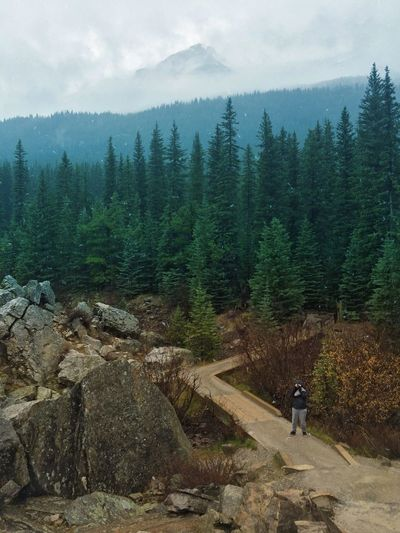 Lake Moraine Banff National Park  Snapseed Enlight EyeEm Nature Mountain Fog Trees Nature Photography The Great Outdoors - 2017 EyeEm Awards Love Yourself Go Higher Summer Exploratorium