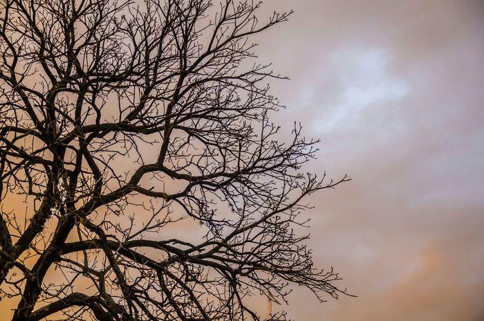 La hora dorada!!!! EyeEm Best Shots Nikon D5100  Lovephotography  Paraguay-Asuncion Nature Golden Hour Threes Weekend