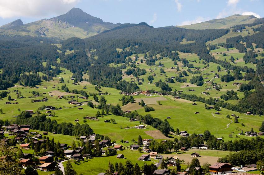 Grindelwald - Switzerland Grass Grindelwald Jungfrau Landscape Mountain Range Nature Rural Scene Switzerland Village