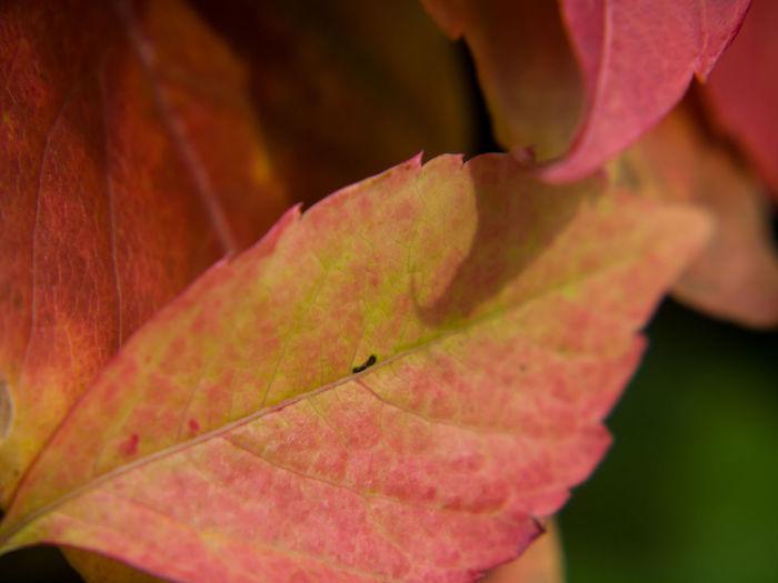 Reddish Autumn