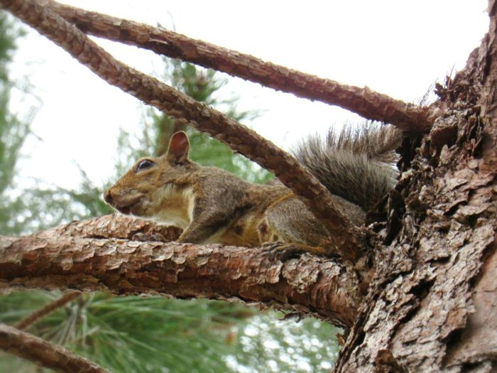 Animals Squirrel New Mother Pine Tree Nature Still Life Photography