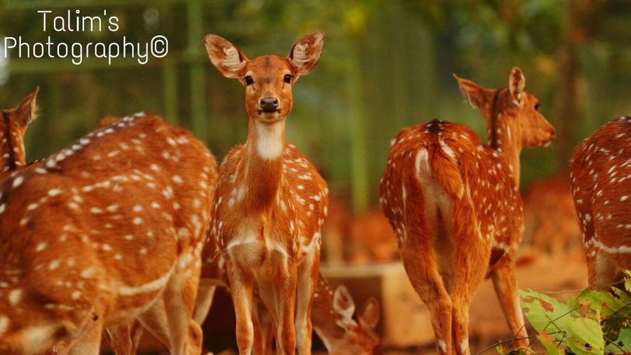 Deer Brown Focus On Foreground Close-up Selective Focus Nature Outdoors Herd Red Zoology Freshness