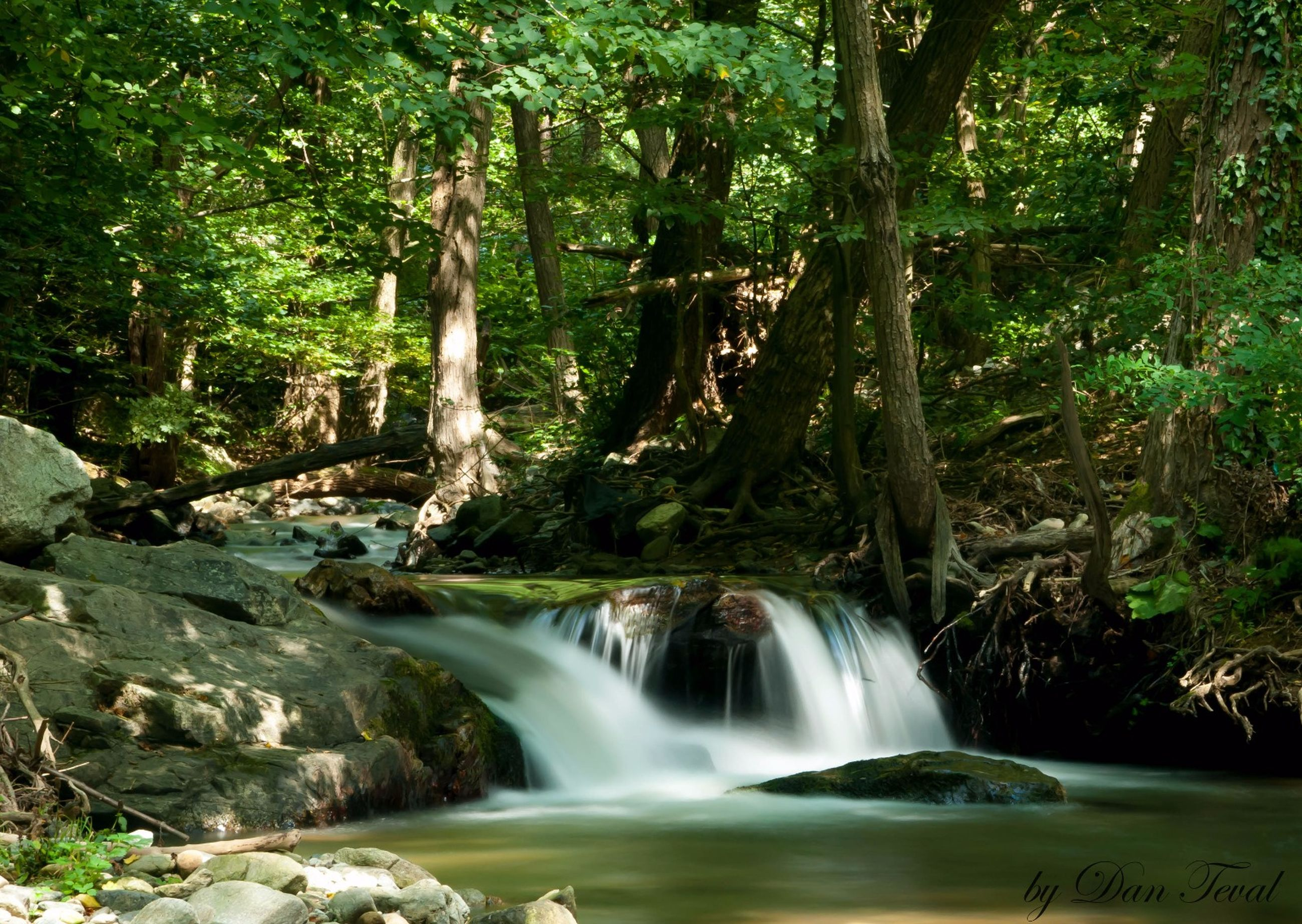 motion, forest, water, waterfall, flowing, flowing water, tree, scenics, long exposure, beauty in nature, blurred motion, tree trunk, nature, stream, tranquil scene, environment, green color, growth, non-urban scene, day, moss, lush foliage, outdoors, power in nature, tranquility, woodland, falling water, no people, natural landmark, green