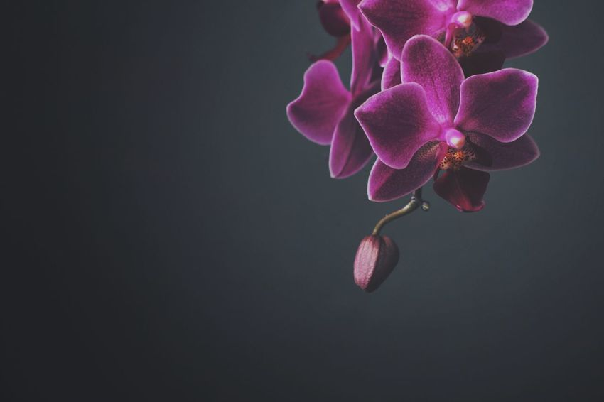 Pink orchid Macro Pink Orchid Flower Beauty In Nature Petal Growth Fragility Nature Freshness Flower Head Close-up Blooming Plant No People Day