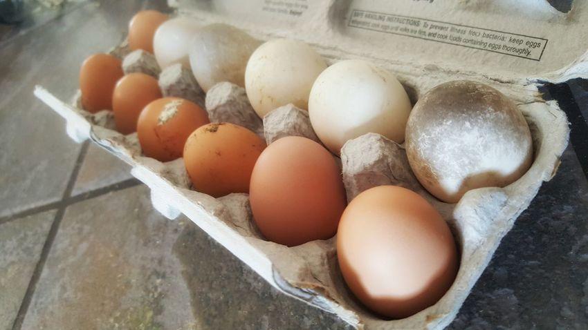 Backyard chicken and duck eggs Eggs Carton Horizontal Eggs... Carton Healthy Eating Healthy Food Farm Fresh Chicken Eggs Duck Eggs