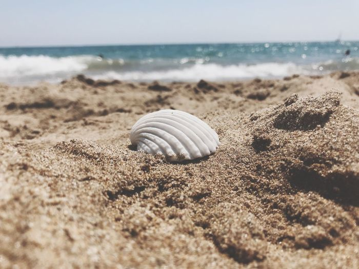 Summer memories Beach Land Shell Sea Sand Animal Shell Water No People First Eyeem Photo Moments Of Happiness