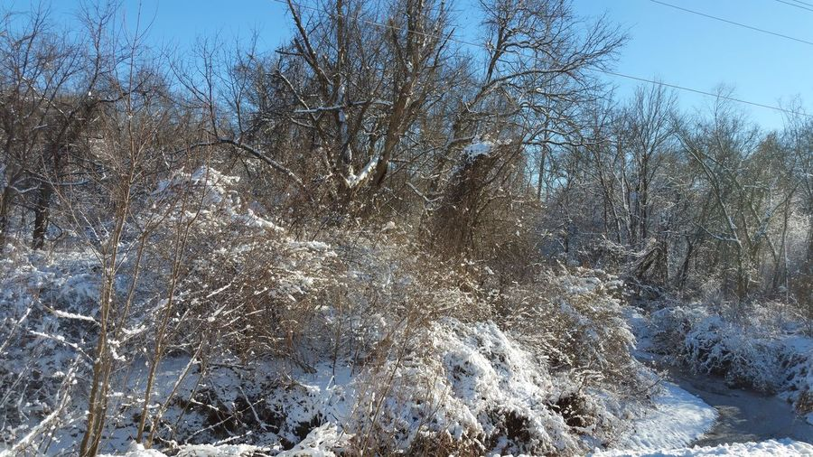 Snow covered bare trees and plants during winter