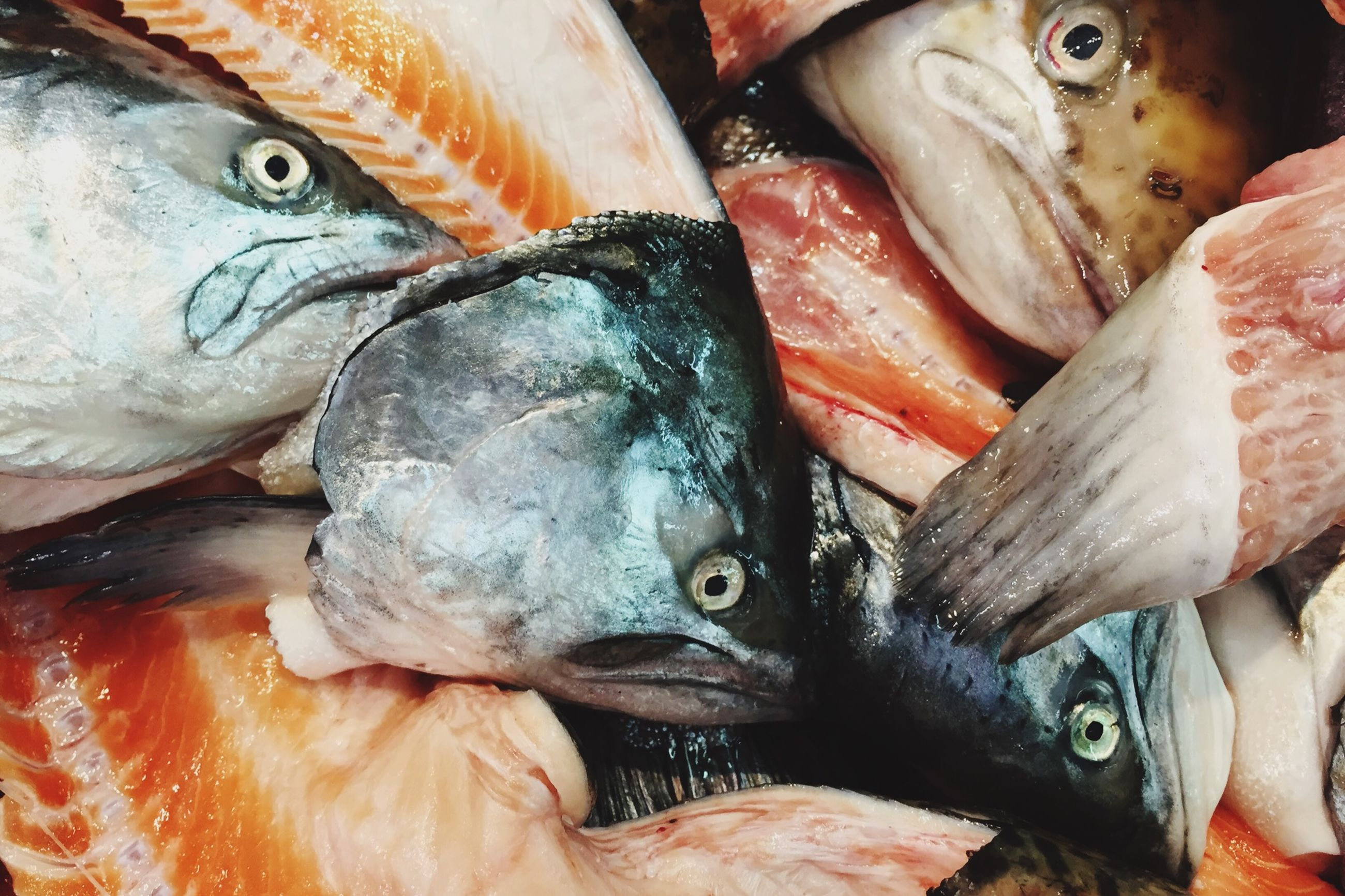 fish, animal themes, seafood, dead animal, for sale, healthy eating, close-up, variation, food and drink, retail, fish market, sale, abundance, food, market stall, market, indoors, choice, raw food, high angle view