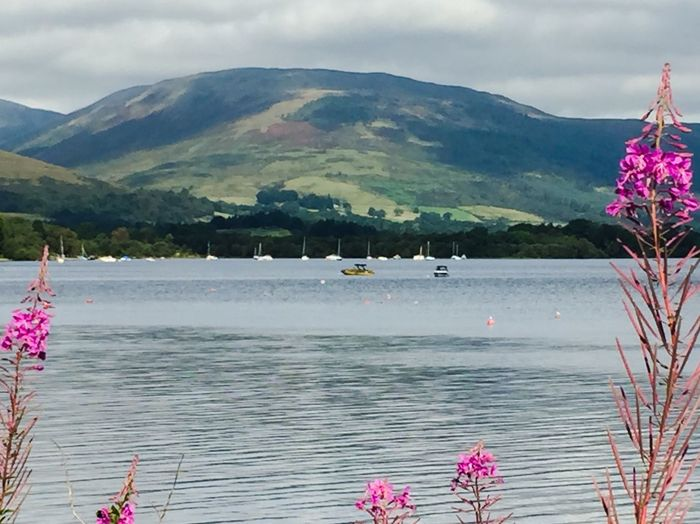 Beauty In Nature Focus On Foreground Pink Water Tranquil Scene Day LochLomond Tranquility Nature Landscape Rural Scene Calm Remote Today In Scotland Mountain Range Outdoors Hill Green Grassy Boats