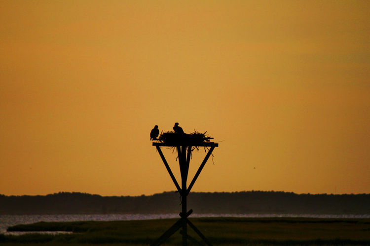 Silhouette birds in nest against clear orange sky